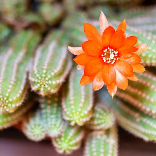 Hasta los cactus florecen